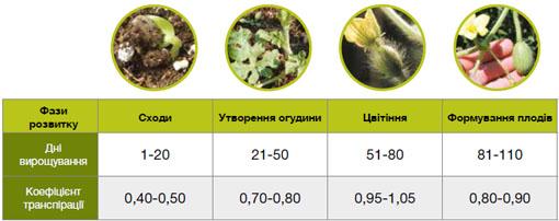 Коэффициент транспирации растений арбуза в зависимости от фазы развития