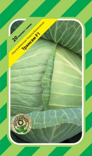 Капуста белокочанная Трансам F1 - 20 семян