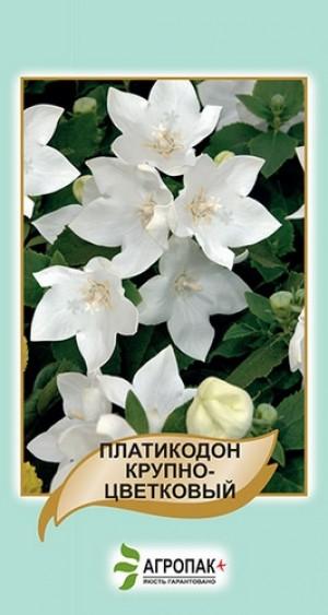 Платикодон крупноцветковый, белый - 50 семян