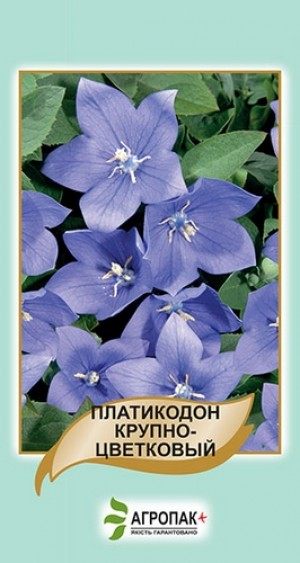 Платикодон крупноцветковый, голубой - 50 семян