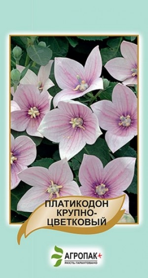 Платикодон крупноцветковый, розовый - 50 семян
