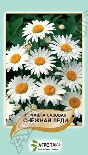 Ромашка садовая Снежная Леди  - 0,5 грамм